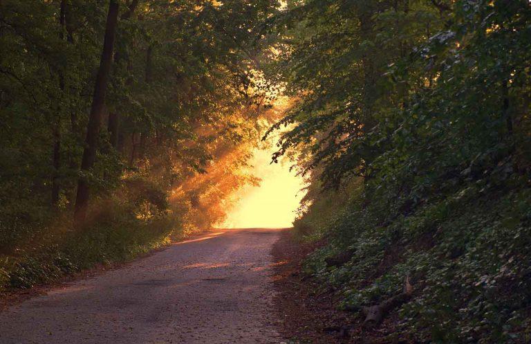 camino con bosques a los costados