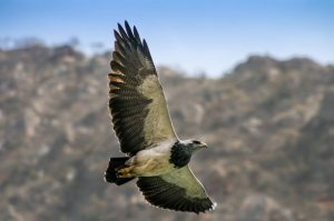 ave volando en el día mundial de la vida silvestre