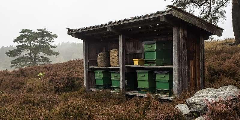 panal de abeja, desde donde se extrae la miel, en medio del campo