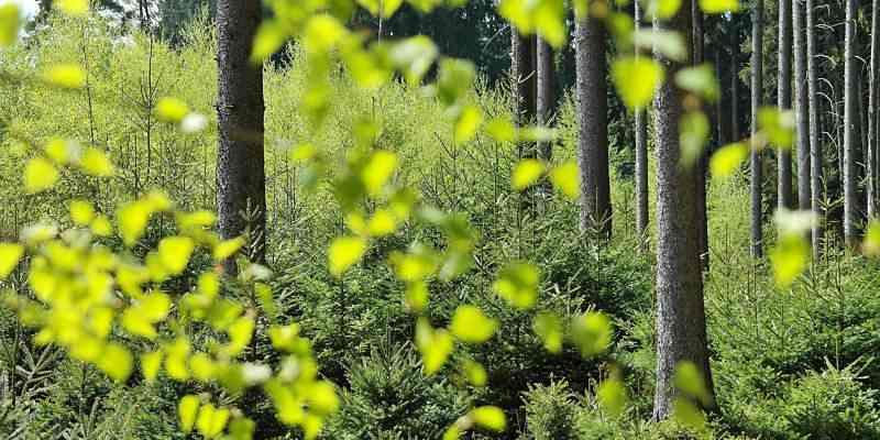 Naturaleza con vida por el cuidado de la tierra