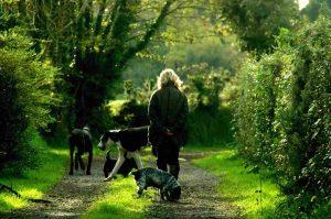 Señora andando por un camino con sus mascotas en el día del animal
