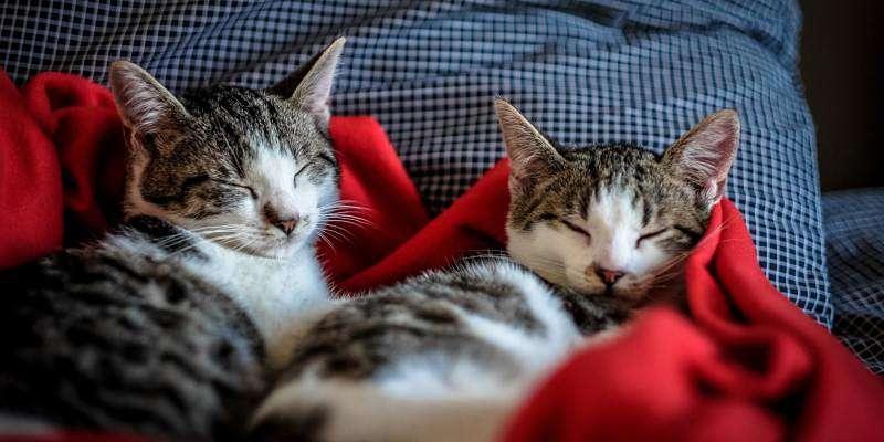 dos gatos durmiendo en el día del animal