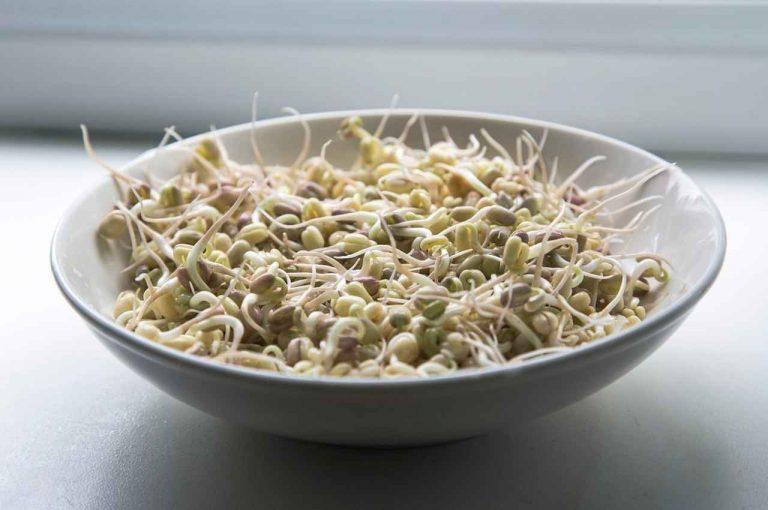 imagen de plato de lentejas germinadas
