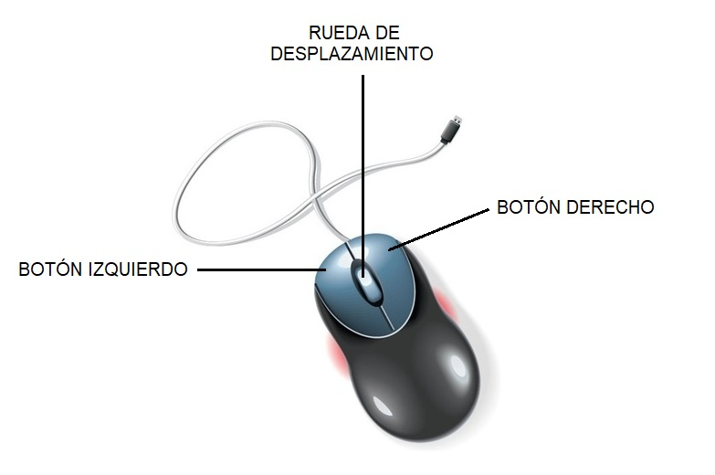 Partes del mouse