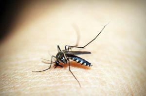 como ahuyentar mosquitos