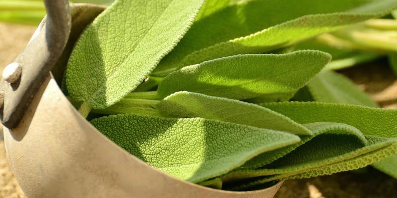 plantas-de-interior-sanadoras
