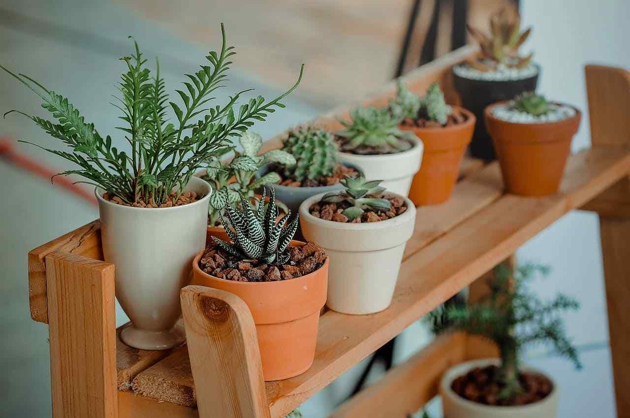 plantas de interior sanadoras