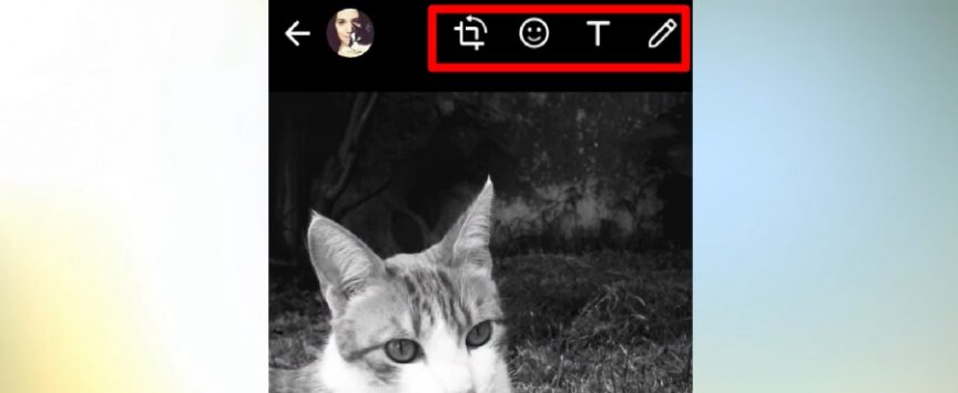 editar foto en whatsapp