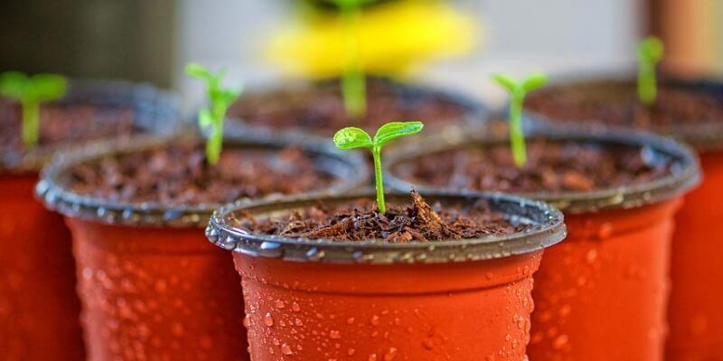 las plantas como hobby