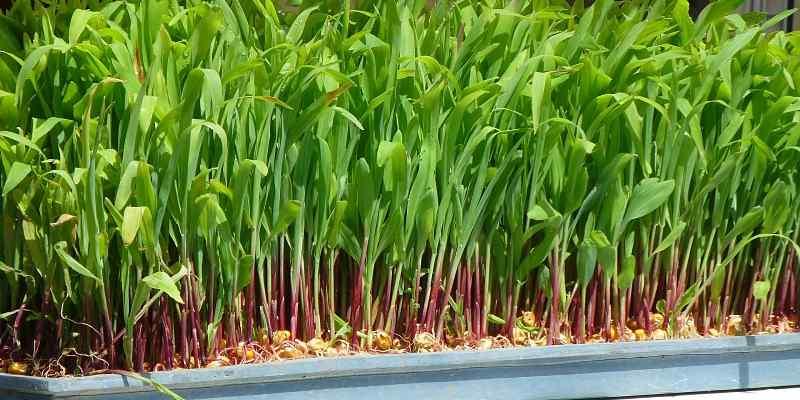 hierbas para el hogar