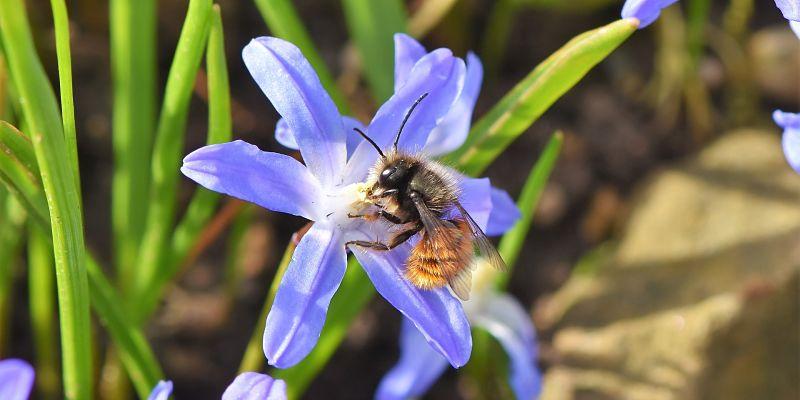 flor violeta con abeja mostrando el trabajo de las abejas