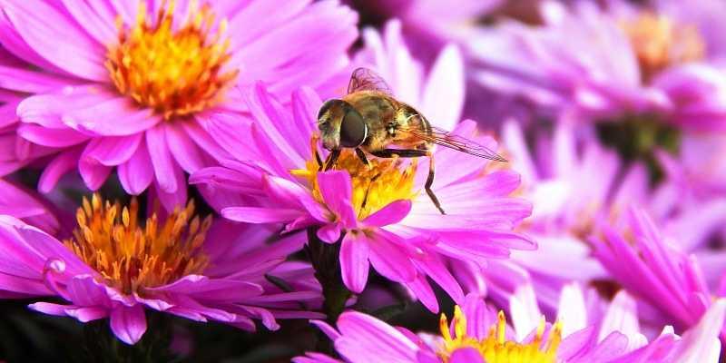 abeja en flor haciendo parte del trabajo de las abejas